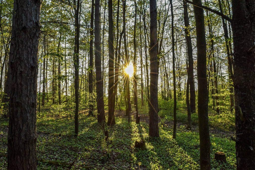 arbres en printemps et soleil
